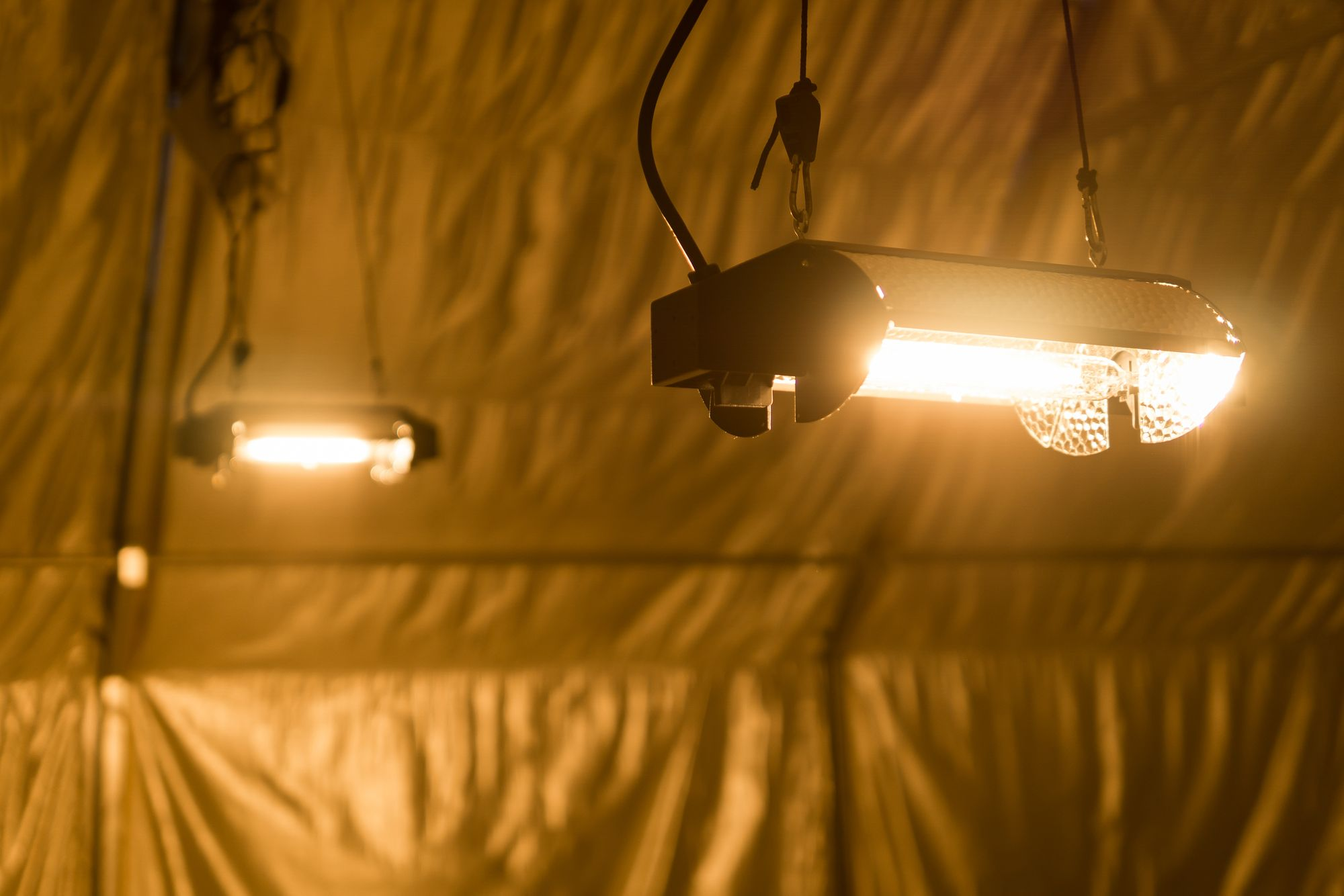 Choosing the Right Grow Light